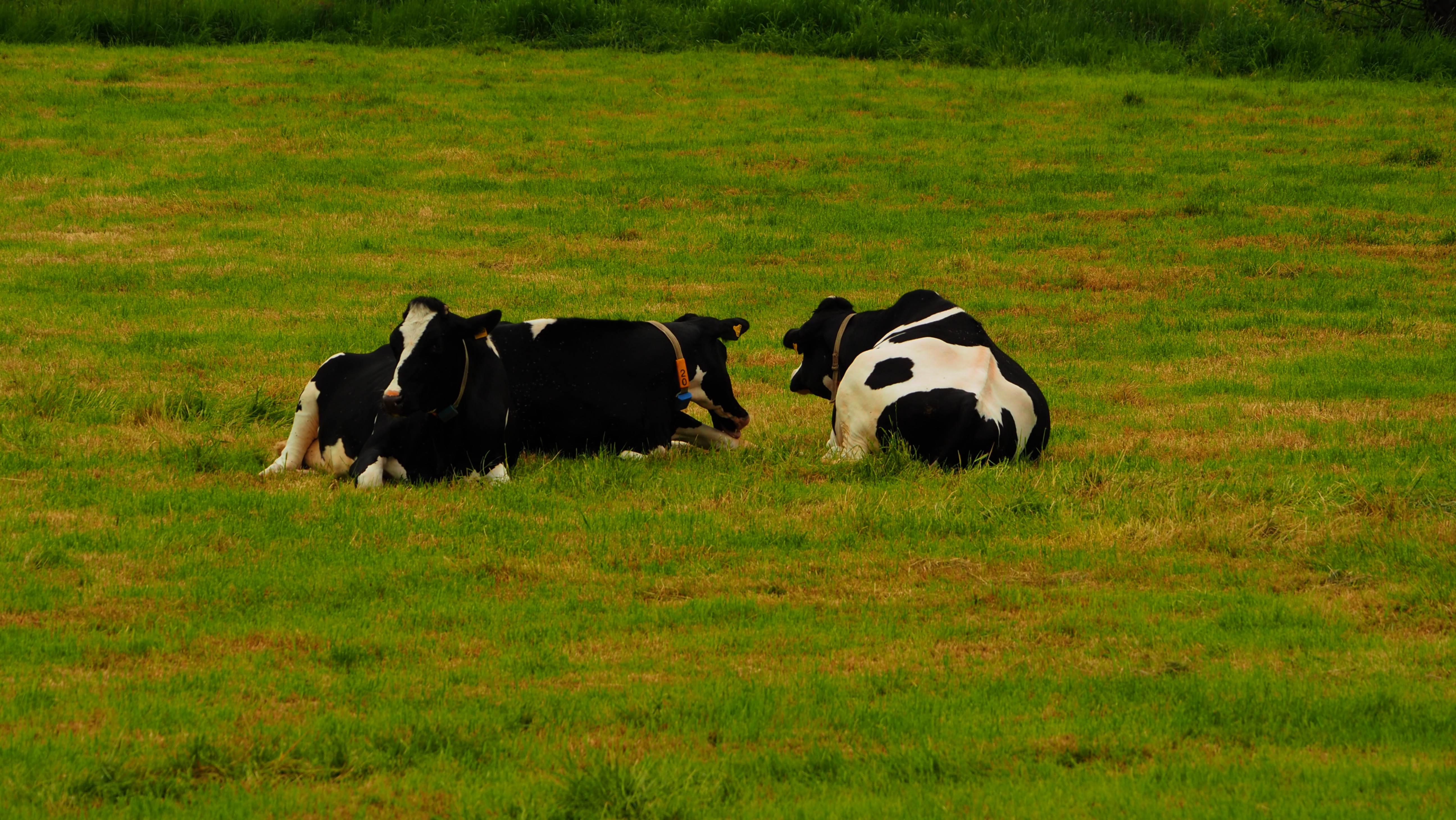 Entspannte Tiere